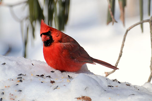 Bette Parette/Great Backyard Bird Count